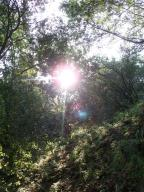 Hiking in the Huckleberries